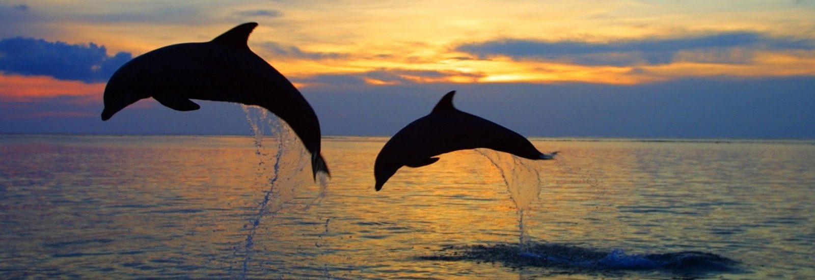 La Rotta dei Delfini