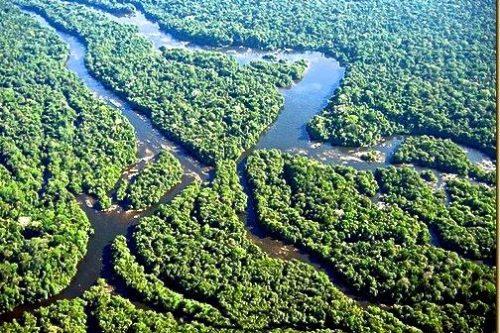 amazzonia alto